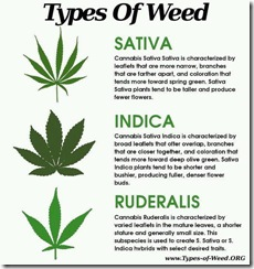 3 types cannabis