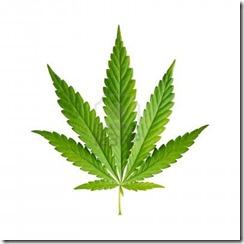 15890419-cannabis-leaf-isolated-on-white-background.jpg