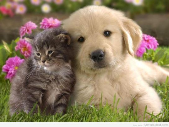 funny-pics-of-cats-and-dogs-together-191