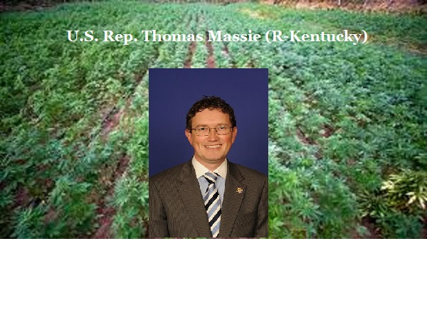 As advocate for industrial hemp production, Kentucky's Thomas Massie standing tall