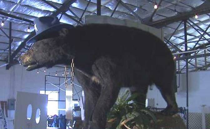 (WTF? You can't make this stuff up!)  Cocaine Bear Attracts Visitors To Lexington Business
