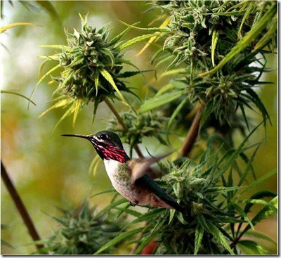 bird on hemp